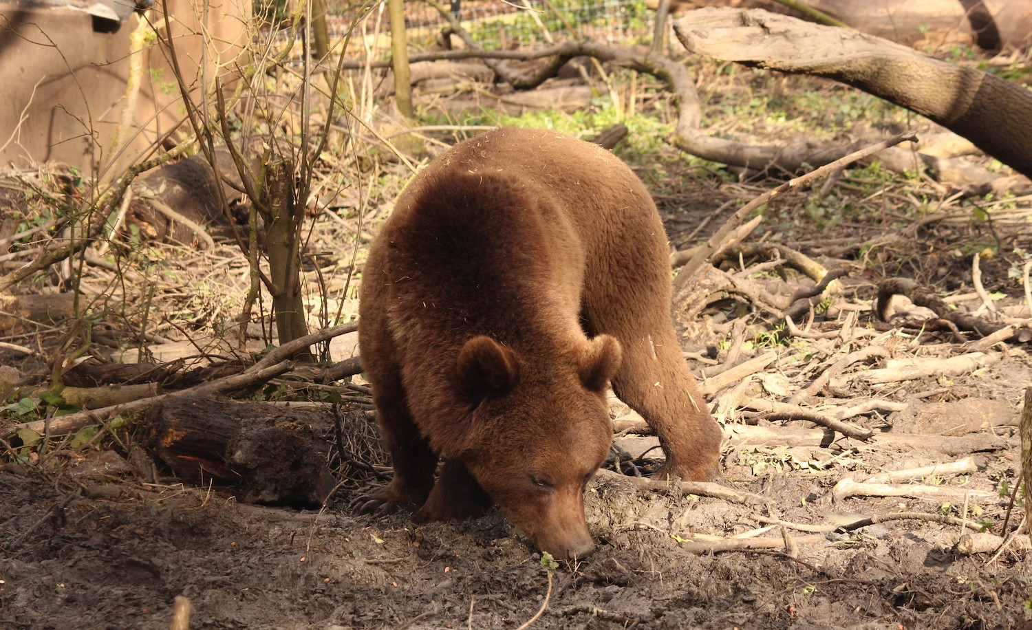 Charity appeal | Help save the bears at Wild Place Project